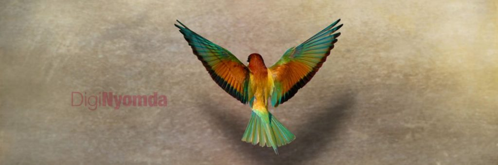 Rudi madár